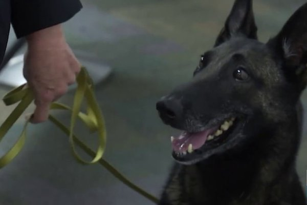 Miami Airport Using COVID Sniffing Dogs On Employees, Says They Have 99% Accuracy